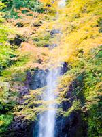 Yoro Fall in Autumn